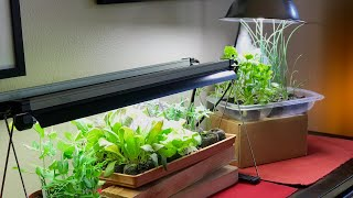 💡 LIVE: 3 Grow Light Mistakes to Avoid for Indoor Vegetable Seedlings, Live Q & A (REPLAY)