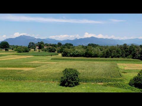 Il Parco Pineta visto dal drone