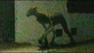 Argentina: Strange Creature Slays Two Dogs in Santa Fe