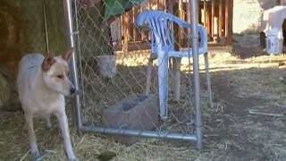 Training with feral dog ( janetrains.com)