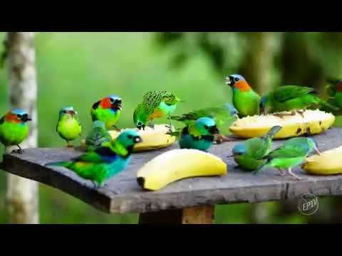 Juquitiba Terra de Muitas Aves