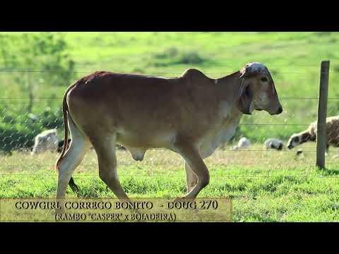 Cowgirl Córrego Bonito - DOUG 270