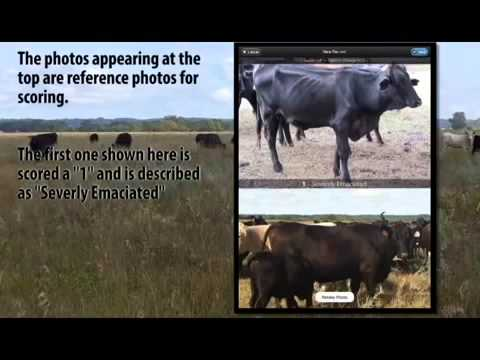 CRYSTALYX® Beef Cow Body Condition Score App