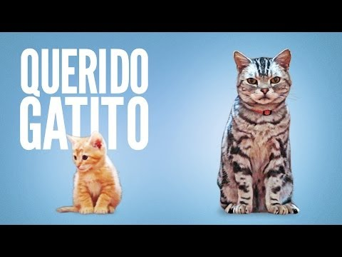 ¡Este Video Felino Es Brillante!