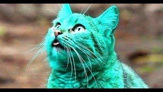 Смешные Kошки и Милые Котята 2019 ♥ Cat Marabacha #36