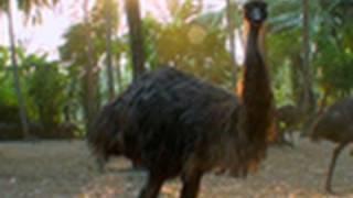 Emu hatchery, Palakkad
