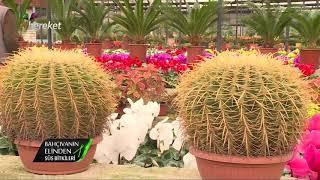 Bahçıvanın Elinden - Begonya, Patos, Sarmaşığı ve Zebra Bitkisi