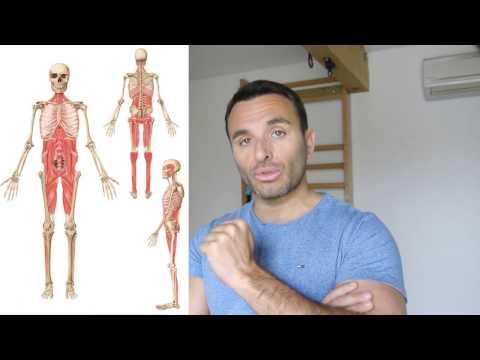 Le rôle de la relaxation des muscles
