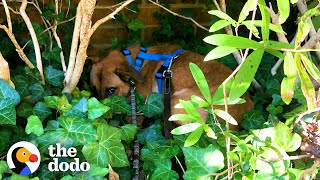 Scared Foster Dog Hid In The Bushes On Walks | The Dodo Foster Diaries