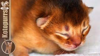 Новорожденные котята и мама кошка [kotopurrs]