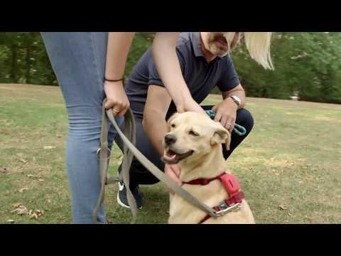 Hunde, Taschen und Wertsachen mit GPS und App tracken und orten: COMBI PROTECT