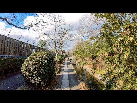 京都・哲学の道 Philosopher's Walk, Kyoto Japan   4K Binaural ASMR Walk