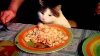Кот ворует макароны