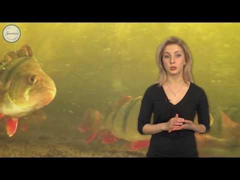 Особенности размножения рыб