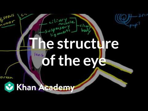 Science Source Eye Anatomy Labeled Illustration