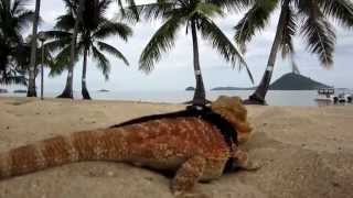 preview picture of video 'Bearded Dragon's Vacation'
