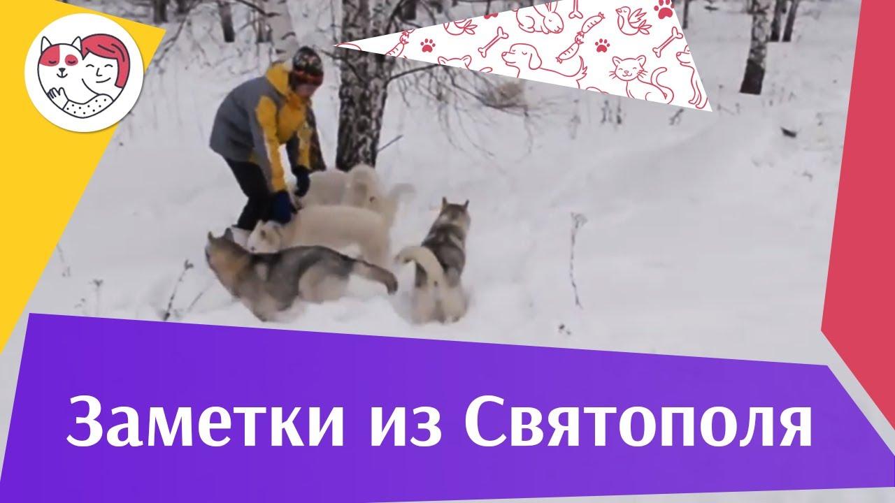 ЗАМЕТКИ ИЗ СВЯТОПОЛЯ выпуск 12 на ilikepet