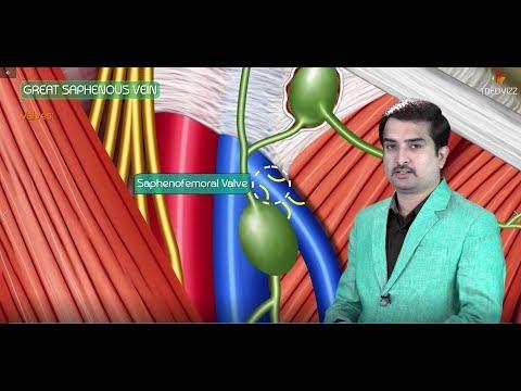 Trombosi di vene profonde delle estremità più basse medicina tradizionale