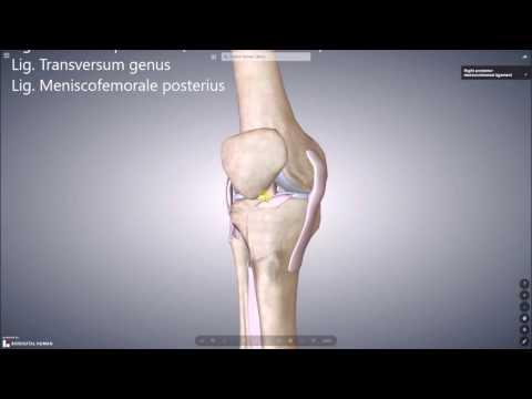 Bewegungstherapie in Ellenbogenfraktur Reihe von Übungen