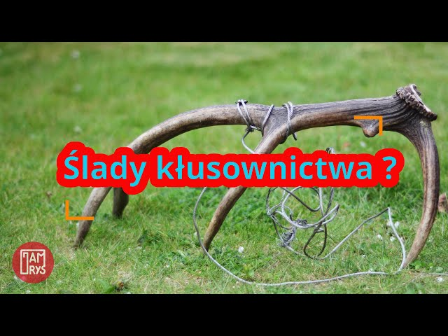 Wymowa wideo od Możdżeń na Polski