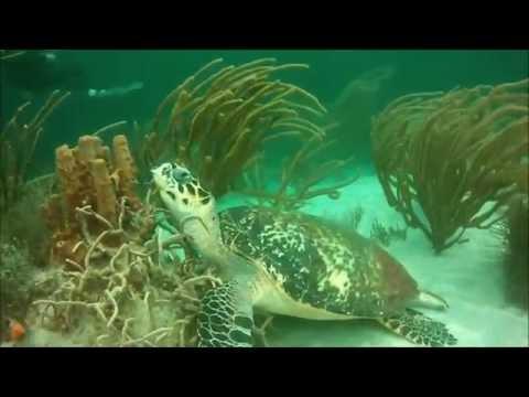Extra Divers Speyside Inn September 2015, Speyside,Tobago,Trinidad und Tobago