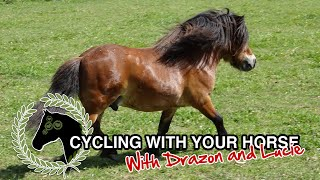 Cycling with your horse   How to exercise your horse without riding