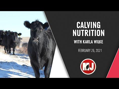 Calving Nutrition | Karla Wilke | February 26, 2021