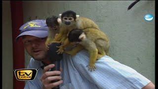 Raab in Gefahr: Kinderschreck im Affenzoo - TV total classic