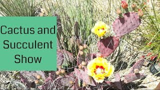 CACSS Show 2018, Central Arizona Cactus And Succulent Society