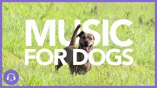 Music For Dogs: Instant Relaxation Music (TESTED)