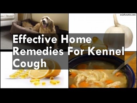 Video Home Remedies For Kennel Cough