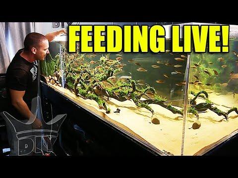 FEEDING THE BIG AQUARIUMS AND FISH