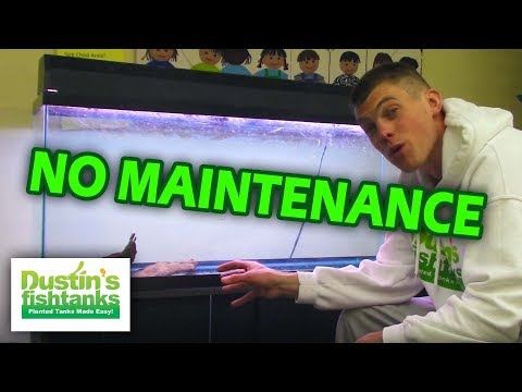 No Maintenance 55 Gallon Aquarium - Low Upkeep Planted Fish Tank