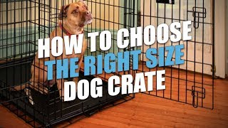 Dog Crate Sizes: How To Size A Dog Crate For A Perfect Fit