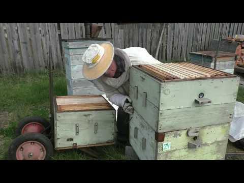 Постановка второго корпуса  Кемеровская система пчеловодства