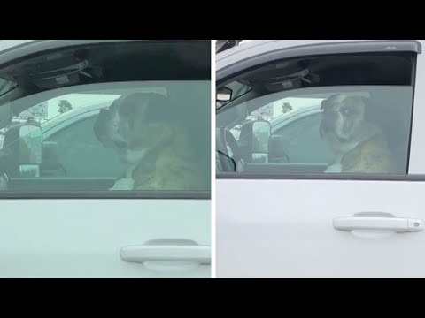 Unimpressed Dog Gives Hilarious Reaction In Car Park