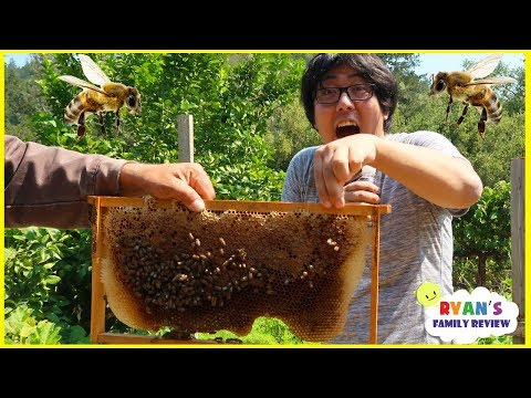 First Time Seeing Bees In Real Life with Ryan's Family Review!!!