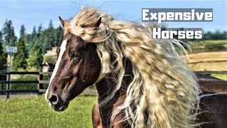 10 Most Expensive Horses Ever Sold In The World