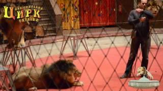 Дрессировщики Пинко о цирковой дрессуре без жестокости