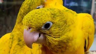 Parrot 2021❤️❤️