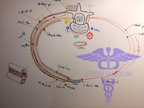 IRM a creierului și hipertensiune