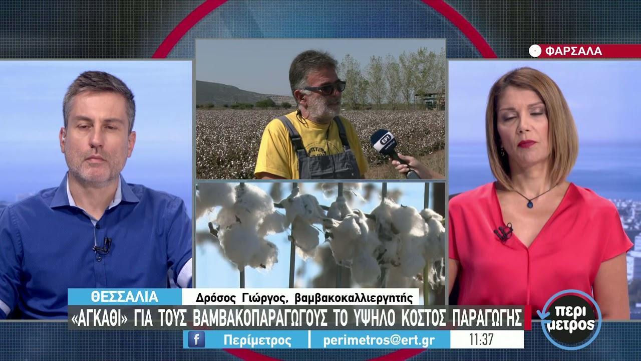 Μικρότερη φέτος η συγκομιδή βαμβακιού στο Θεσσαλικό κάμπο | 27/09/2021 | ΕΡΤ