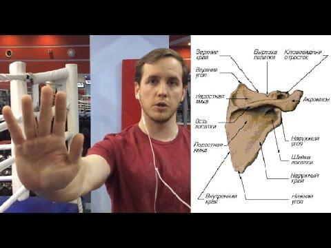 Сколиоз грудного отдела позвоночника взрослый