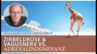 Zirbeldrüse & Vagusnerv VS Adrenalindominanz   Dr. med. Ingfried Hobert