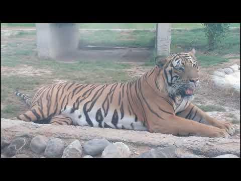🦁Ras Al Khaimah Zoo/Wild life park||Vlog No:2.RAK zoo 3rd largest zoo in UAE||റാസൽഖൈമ zoo 🐫