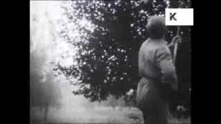 1940s/ 1950s Farmer Sprays Insecticide, Pesticide Onto Trees, Archive Footage