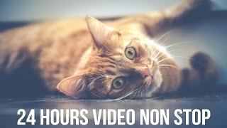 24 HOURS OF PURRING CAT [HQ] Sleeping Relaxation Yoga Meditation Sound Music