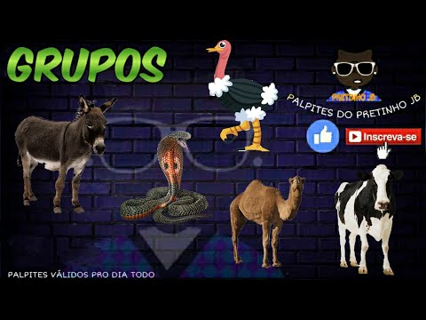 JOGO DO BICHO DE HOJE 03/11/2020 PARA TODAS AS LOTERIAS