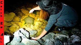 CATCH Wild TURTLES!