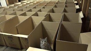 Смотреть онлайн Много коробок и много кошек